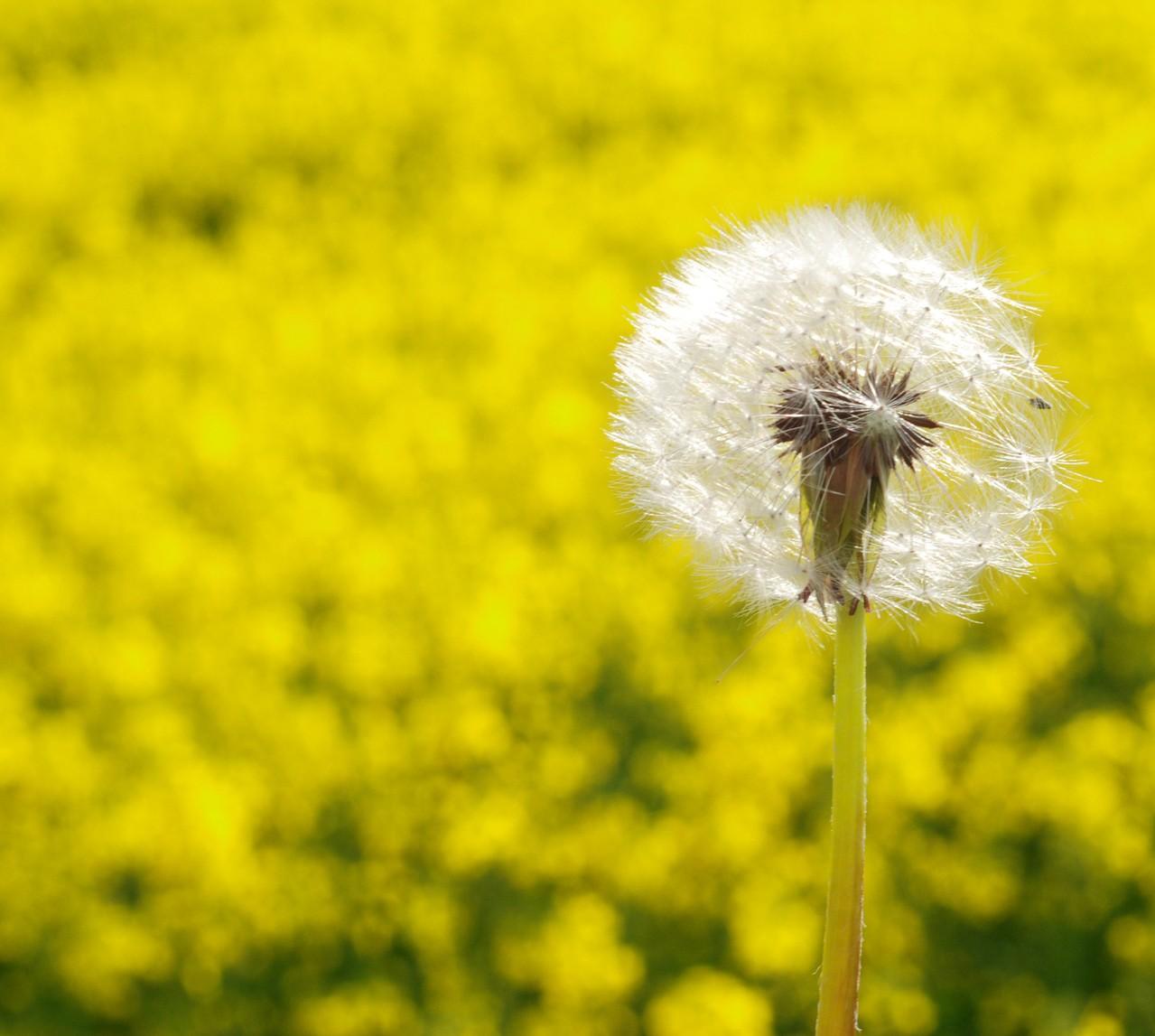 Jakie są przyczyny alergii?